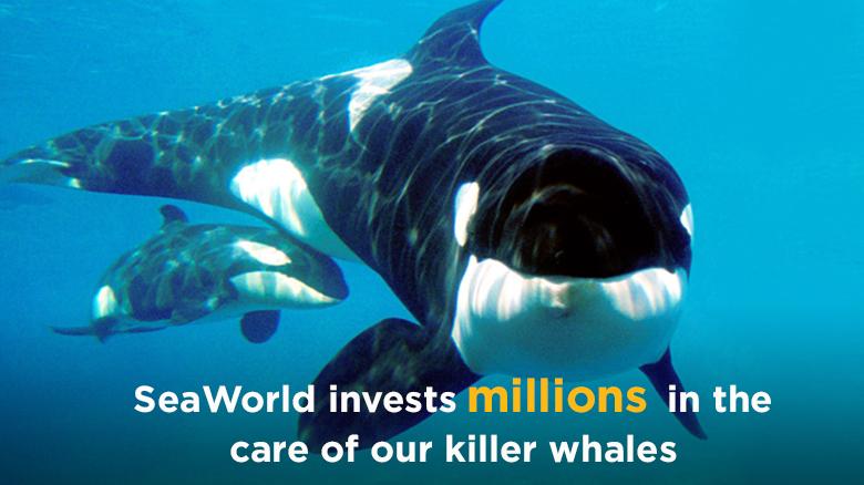 Persuasive essays on whaling